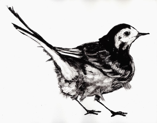 wagtail 3